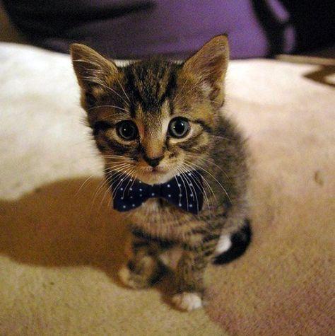 Cats (@Cats)