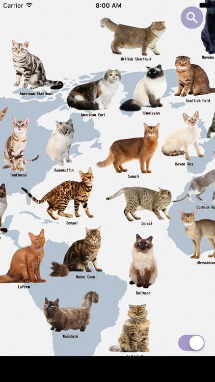 The Best Cat Breed Identification Apps Best Cat Breeds Cat Breeds Cat Facts