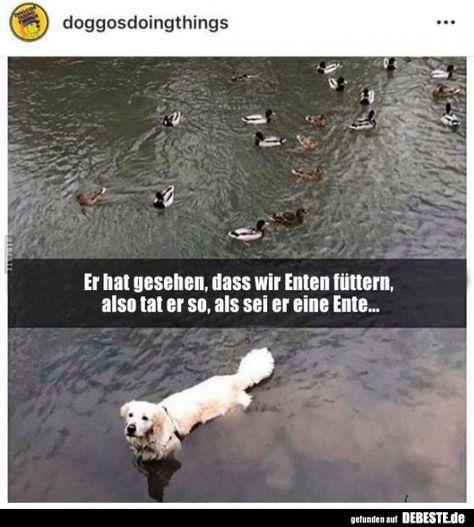 Er hat gesehen, dass wir Enten füttern, also tat er so, als.. | Lustige Bilder, Sprüche, Witze, echt lustig