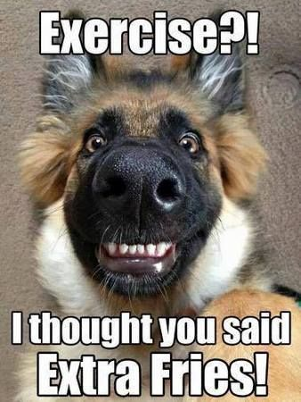 Funny Animal Pictures with Captions #animals #dogs #dog #dogmemes #dogmeme #animalmemes  #Iloveanimals #ilovedogs #funny #funnydogmemes #germanShepard #dogsofpinterest
