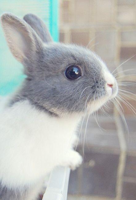 Bunnies For Sale Near Me >> Pin On Bun Bun