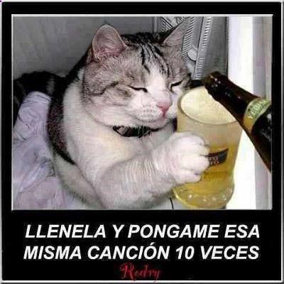 Resultado De Imagen Para Animales Graciosas Con Frases Chistes De Perros Meme Gato Gato Borracho