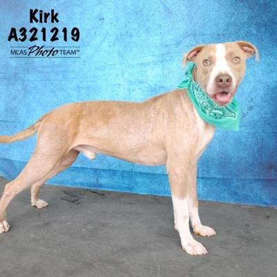 7 21 19 Act Quickly Conroe Tx Labrador Retriever