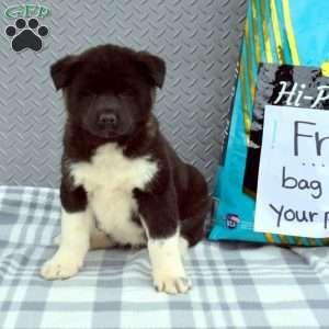 Akita Puppies For Sale Akita Dog Breed Profile In 2020 Akita Puppies Akita Puppies For Sale Puppies