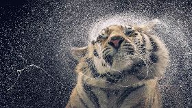 تحميل اجمل خلفيات لاب توب Best Wallpapers Hd Pet Portraits Animal Photo Animal Photography