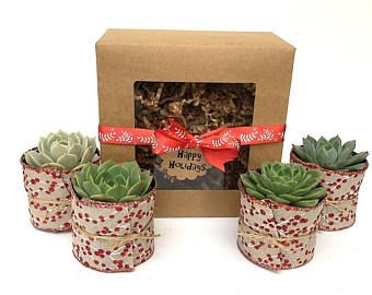 Christmas Succulent Gift Ideas.Succulent Gift Box Hostess Gift Garden In A Box Personalized