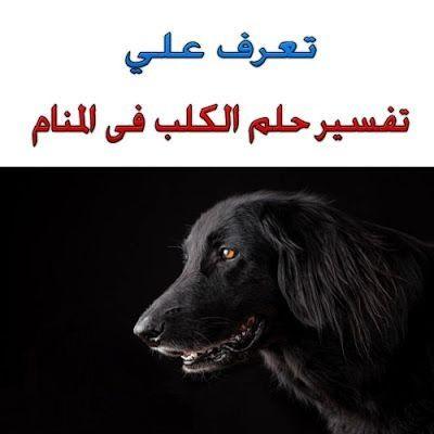 تفسير حلم الكلاب في المنام Blog Posts Animals Movie Posters