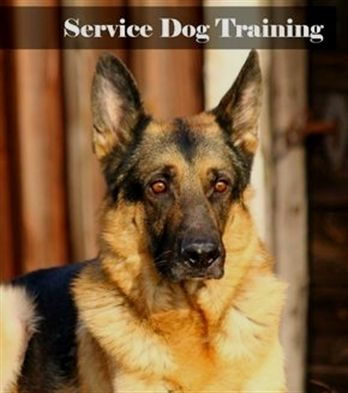 Pin On Dog Training Cesar Millan