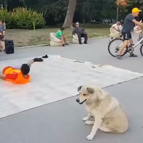 Who Does It Better? 🐕🤸♂️
