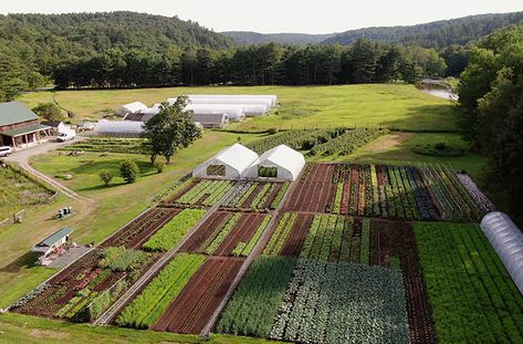 Conor Crickmore of Neversink Farm is the epitome of a successful journey to market farmer. Vegetable Garden Planner, Vegetable Garden Design, Vegetable Farming, Organic Farming, Organic Gardening, Farm Layout, Farm Plans, Organic Horticulture, Homestead Farm