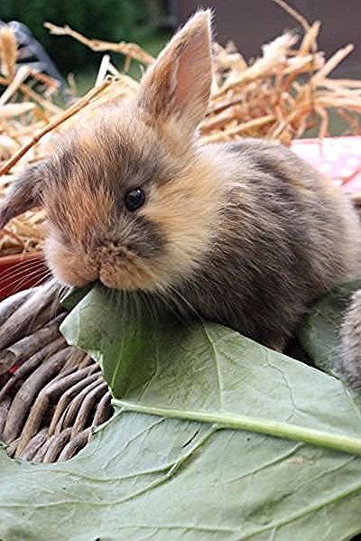 Hallo Liebe Kaninchenfreunde In Meiner Kleinen Aber Feinen