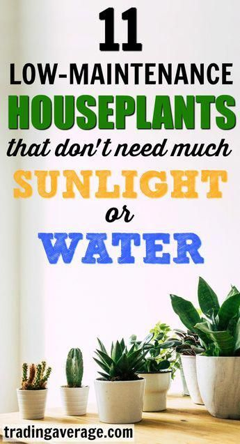 Looking For Houseplants That Don T Need Much Sunlight This Article Will Give You 11 Low Maintenance Indoor Low Maintenance Indoor Plants Plants Hanging Plants