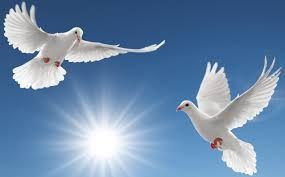 vliegende duif - Google Zoeken | Duif, Afbeeldingen