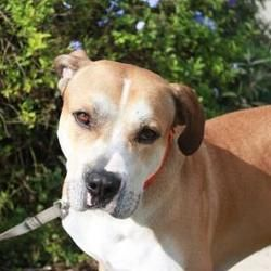 Available Pets At Caloosa Humane Society Inc In Labelle Florida Humane Society Dog Adoption Pets