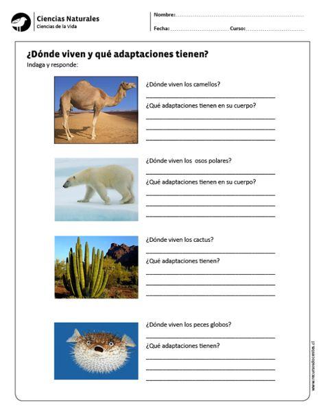 9 Ideas De Adaptaciones De Los Seres Vivos Ciencias Naturales Adaptación Ciencias De La Naturaleza