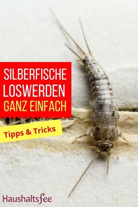 23 Silberfische Küche Bilder. Die Besten 25 Silberfische Bekampfen ...