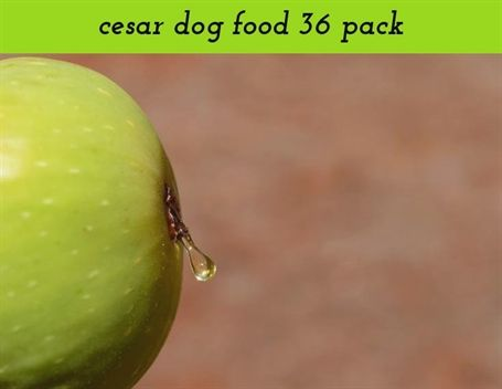 Cesar Dog Food 36 Pack 1239 20180909095847 59 Chinese Food 11208 Liberty Ave Food Open On Christmas Eve Food Challenges Orange Food Cat Food Dog Food Recipes