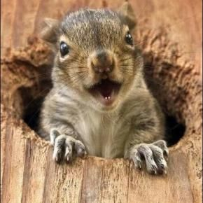 All Newest Pixdaus Funny Animals Squirrel Funny Funny Animal Videos