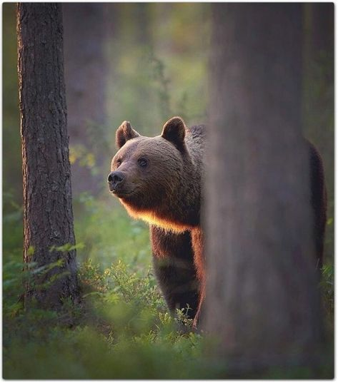 30 Amazing and Impressive Wildlife World Photos  H3rCom  Impressive  Strange  Funny