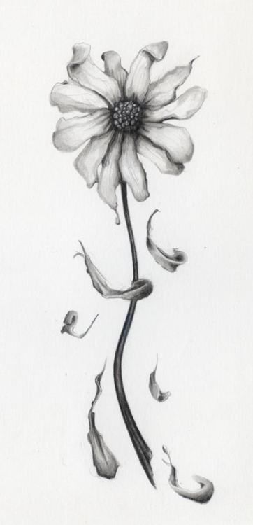 15 Ideas For Flowers Drawing Pencil Daisy Pencil Drawings Of Flowers Flower Drawing Dying Flowers