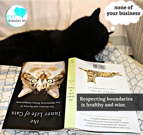 130 Books With Cats Ideas In 2021 Cats Books Cat Books