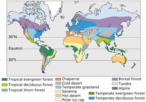 7 best world maps images on pinterest biomes ecology and geography gumiabroncs Image collections