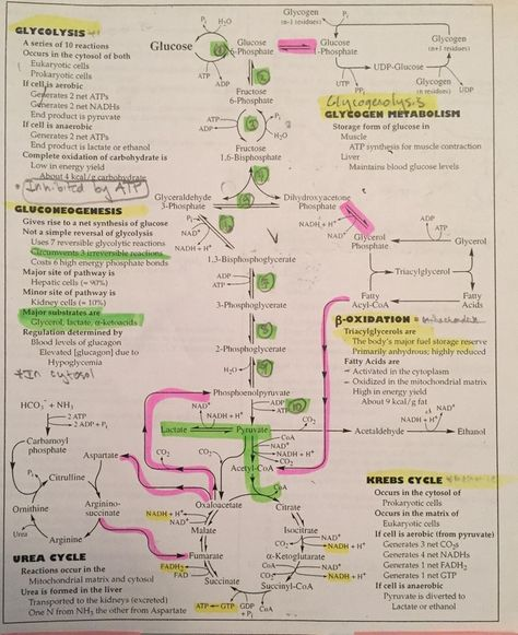 Overview of metabolism all in a flowchart : Mcat