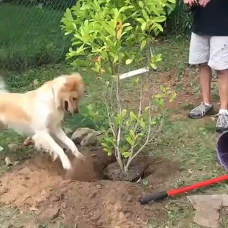Gardening is a ruff work!😂