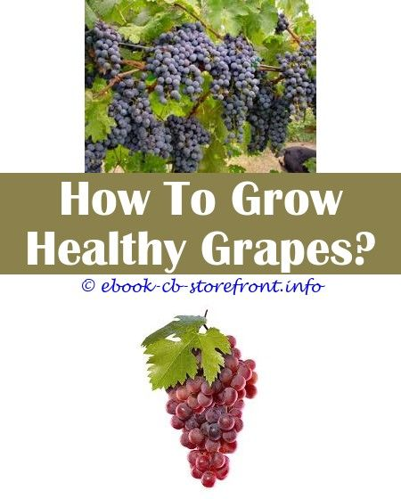 18 Superb How To Grow Concord Grapes From Seeds Grape Plant Grape Growing Trellis Grape Trellis