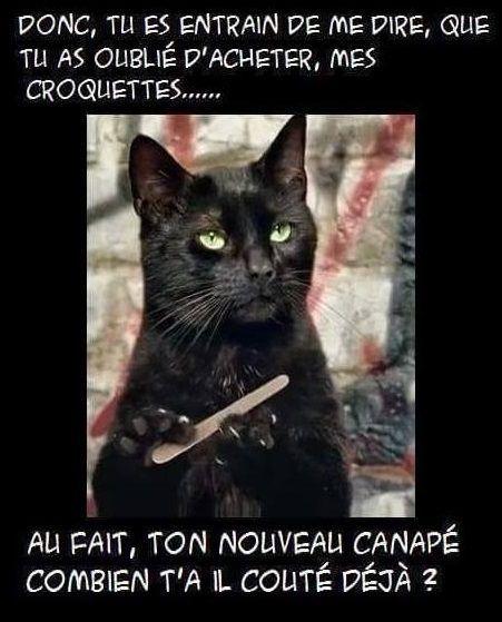 Mon chat cet enfoiré sur pattes.     -  #Cet #chat #enfoiré #Mon #pattes #sur