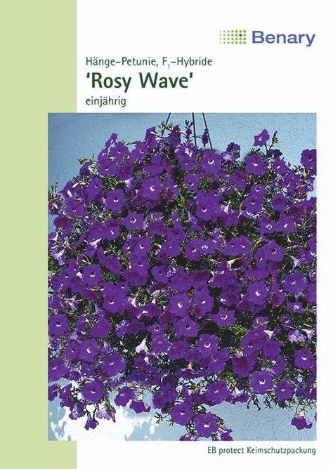 Petunie Wonderwave F1 Rosy Einjahrig Mit Bildern Petunien