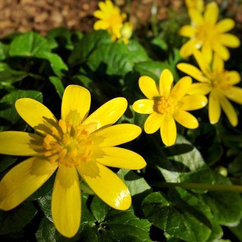 Fiori Km 0.I Regali Del Mio Giardino Troppo Belli Fiori Fiore Flowers