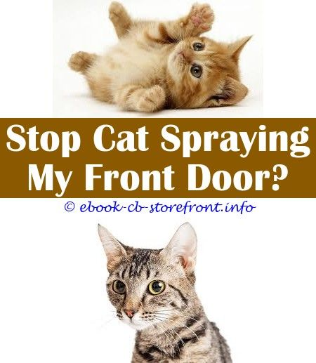8 Discerning Clever Hacks Cat Pee Neutralizer Spray Automatic Water Spray Cat Deterrent Cat Sprays On Everything How Do You Get Your Male Cat To Stop Spraying