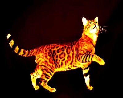 Pin By Halim Hakim On كازا Cats Animals