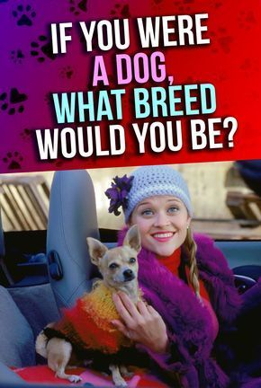 Personality Quiz: Are you a certified dog lover? Do you love personality quizzes? If so, then you definitely need to take this fun test! Animal Quiz, dog personality test, quiz Buzzfeed, Playbuzz quizzes, Quiz dog. Are you a Labrador Retriever? a Pug? a Dobermann? Pomeranian? We'll see!