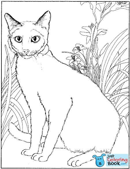 Siamese Cat Animals Adult Coloring Pages Pertaining To Siamese