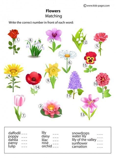 Картинки с названиями цветов на английском