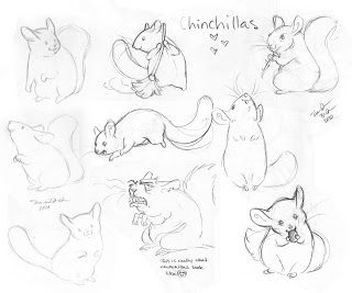 102 best chinchilla illustrations images on pinterest art paintings chinchillas and comics