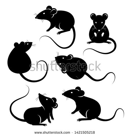 Stock Vector Set Of Rats Black Silhouettes Isolated On White Vector Illustration Symbols Of 2020 Chinese Ne Rat Silhouette Black Silhouette Animal Sketches
