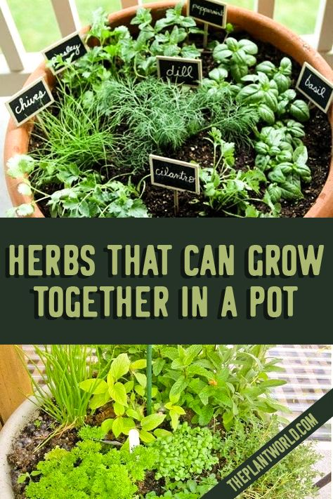 Herbs That Can Grow Together In A Pot In 2020 Home Vegetable