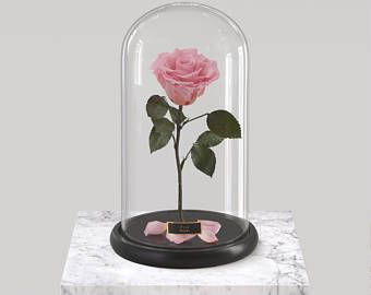 Beauty And The Beast Rose Forever Rose Rose In Glass Dome Etsy