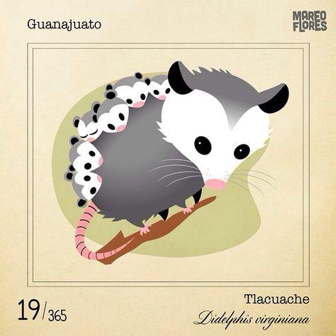 El Tlacuache Bichosmexicanos By Mario Flores El Tlacuache Ajolote Arte De Mascotas