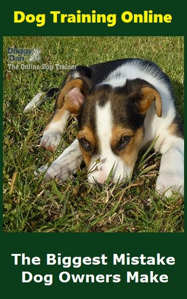Why People Love Doggy Dan S Training Methods Dog Training