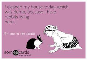Rabbit Ramblings Funny Bunny Memes Memes Funny Bunnies Bunny Meme