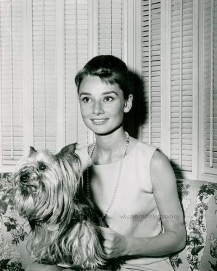 The actress Audrey Hepburn photographed with Mr. Famous (her Yorkshire Terrier) in her dressing room at the Paramount Studios, located on Melrose Avenue, in Hollywood, a neighborhood in the central region of Los Angeles, California (USA), two weeks...