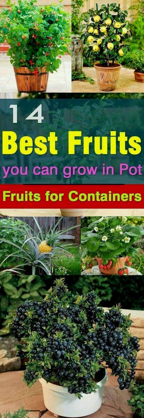 Pin By Ashley Littleton On My Little Garden Plants Indoor Vegetable Gardening Growing Vegetables