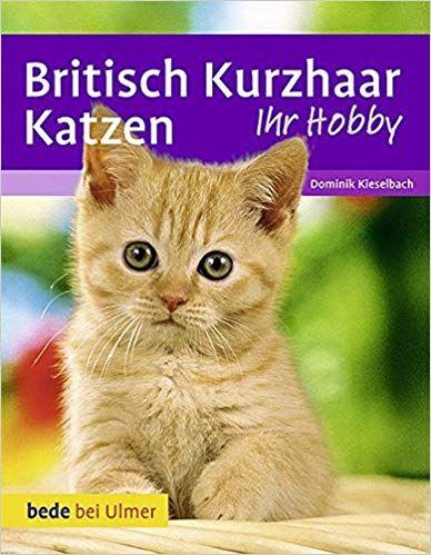 Britisch Kurzhaar Katzen Katzen Katzenspielzeug Katzenbaum
