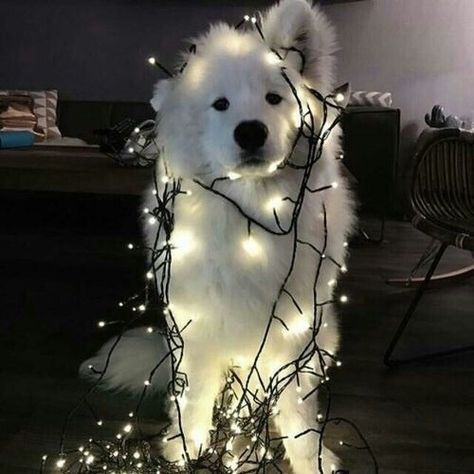 dog, cute, and light image
