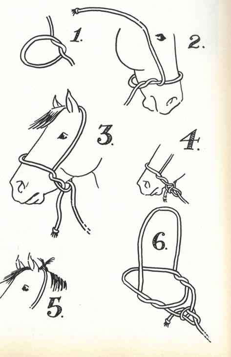 Tying a Halter - Western Horseman Pretty Horses, Horse Love, Beautiful Horses, Horse Riding Tips, Horse Gear, Horses And Dogs, Show Horses, Western Horseman, Horse Halters
