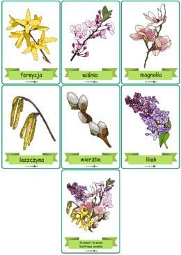 Drzewa I Krzewy Kwitnace Wiosna Zestaw Plansz Wersja Kolorowa Printoteka Pl Flora Diy Material